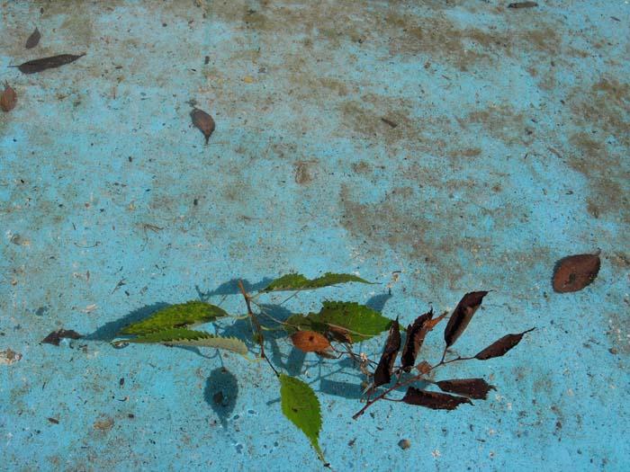 pond 28cm x 21,0cm Edition of 5