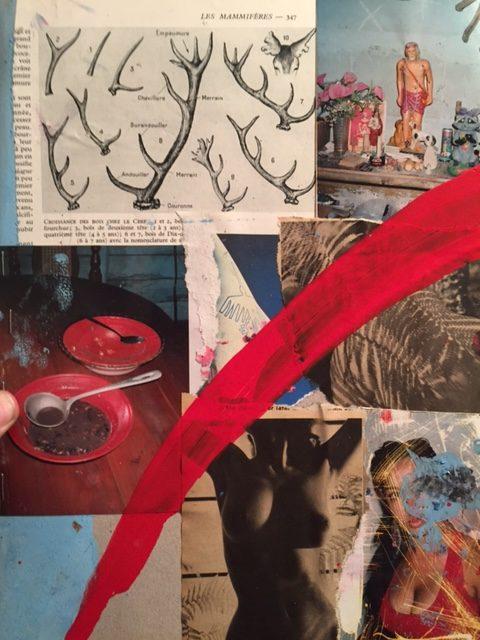 collage les mammiferes 2017