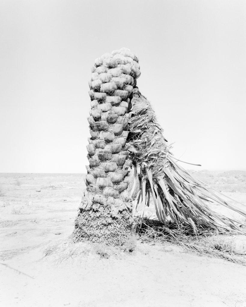 Palm , 2019, 135 cm x 107,8 cm / 98 cm x 78,4 cm, Archival Pigment  Print, Edition 5