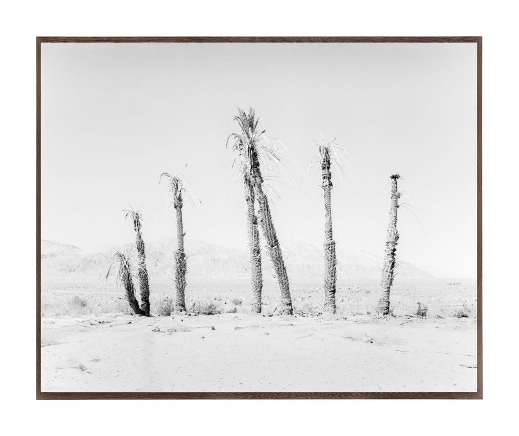 House of Palms, 2019, 135 cm x 107,8 cm / 98 cm x 78,4 cm, Archival Pigment  Print, Ed. 3/3, Ed. 2/5