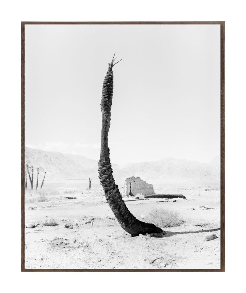Palm 07, 2019, 135 cm x 107,8 cm / 98 cm x 78,4 cm, Archival Pigment  Print, Ed. 1/5, Ed. 1/3
