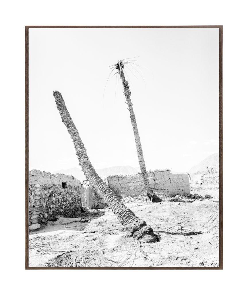 Twin Palms, 2019, 135 cm x 107,8 cm / 98 cm x 78,4 cm, Archival Pigment  Print, Ed. 3