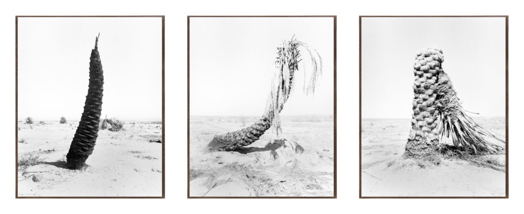 Palm 01, 02, 08, , 2019, 98 cm x 78,4 cm, Archival Pigment  Print, Ed. 3/5, Ed. 1/5, Ed 3/5