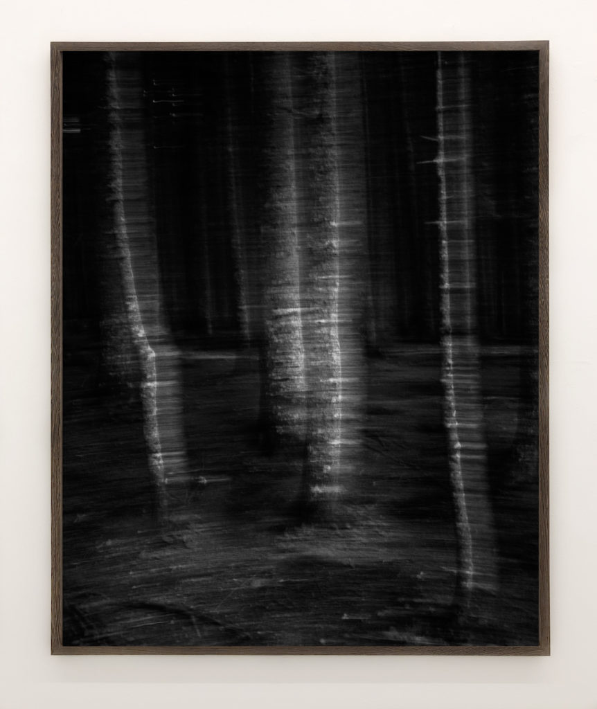 Moving Trees 01, 2017, 98 x 78,4 cm, Archival Pigment Print, Edition of 3