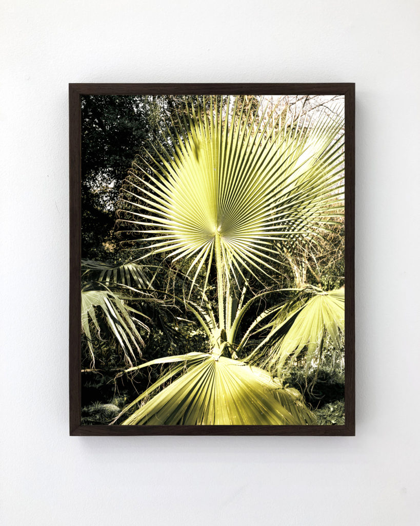 Plant 01, 2017, 50 x 40 cm, Archival Pigment Print, Edition of 5