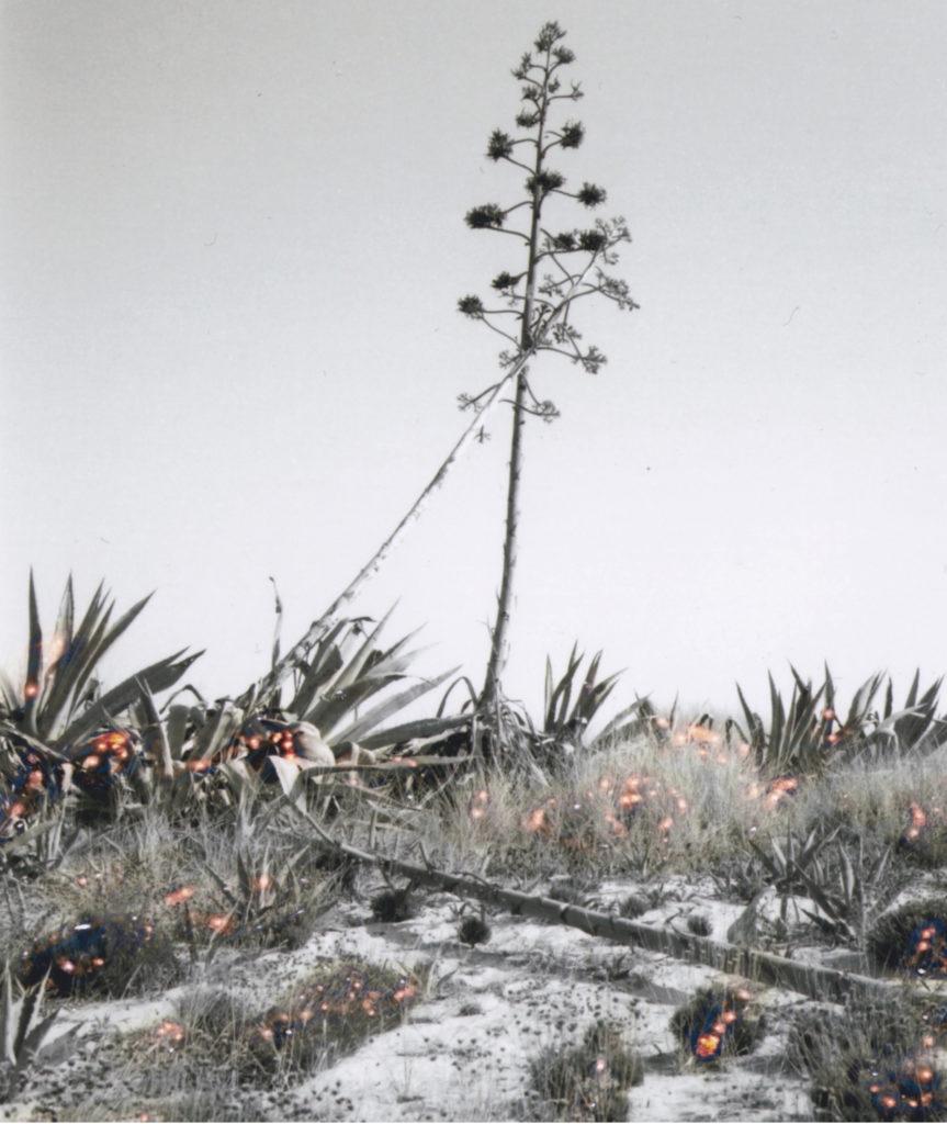 untitled, 2019, 12x10 cm, framed 33x39 cm, silver gelatin print , unique