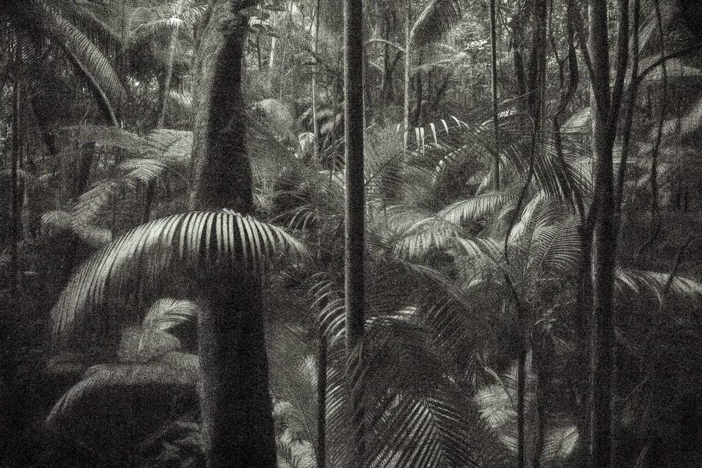 Viagem Pitoresca 75 cm x 112 cm (30 x 44 in) edition 5