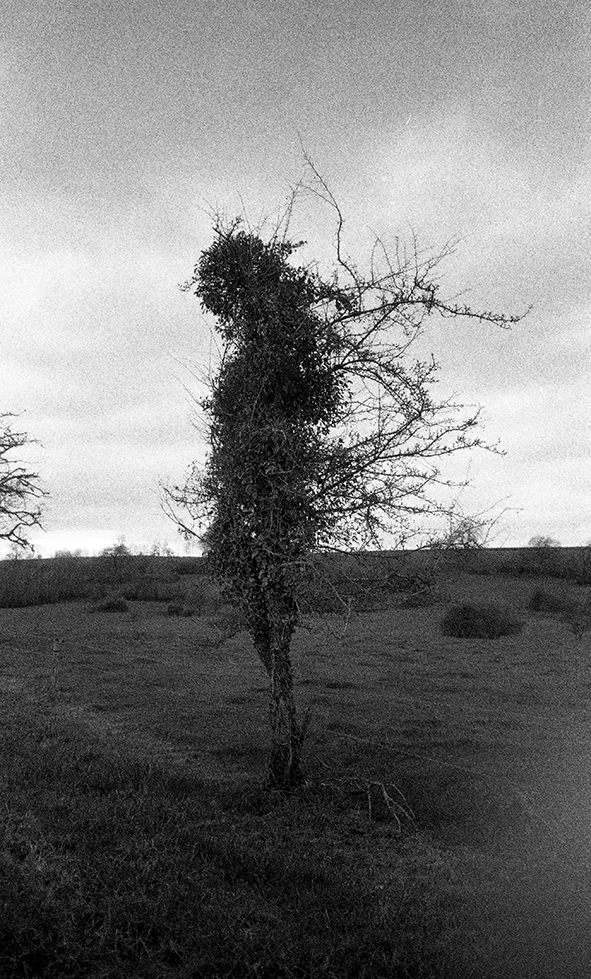 arbre qui danse 90x60 cm ed 3 Inkjet Print on Hannemuhle Paper